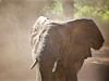 Elefante Parco Tarangire